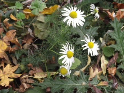 Mayweed end of October 2014