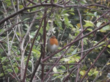 Robin Oct 2014