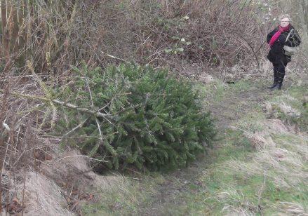 Xmas tree dumped 2015
